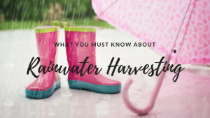 What you must know about rainwater harvesting